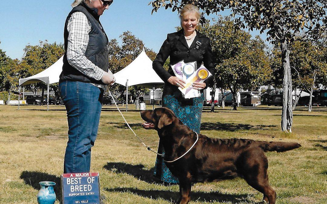 Hazel wins BOB at Del Valle Dog Club of Livermore