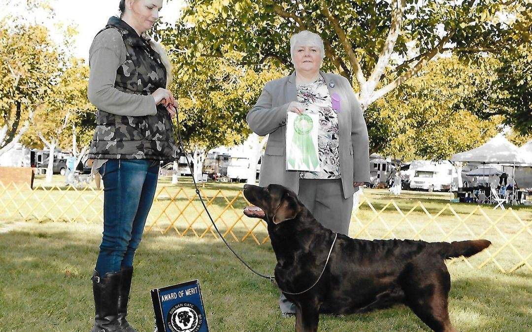 Hazel wins Major WB and JAM at Golden Gate LRC Specialty
