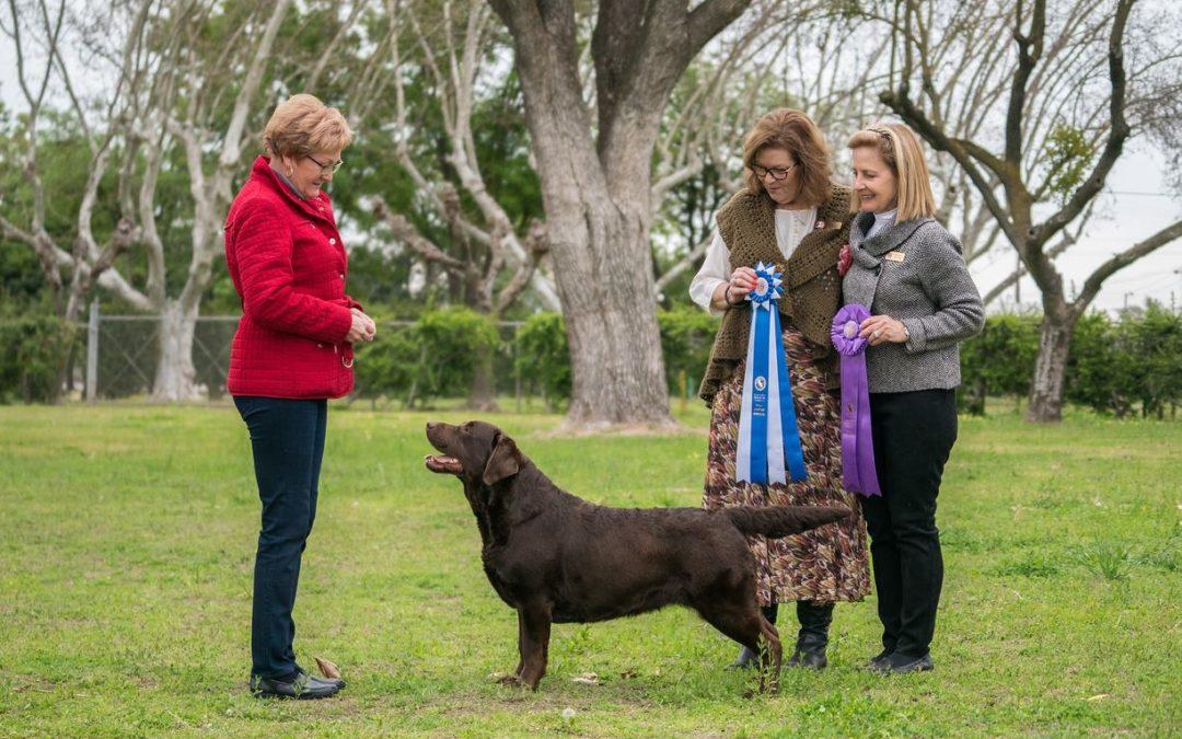 Hazel wins Major at CCLRC