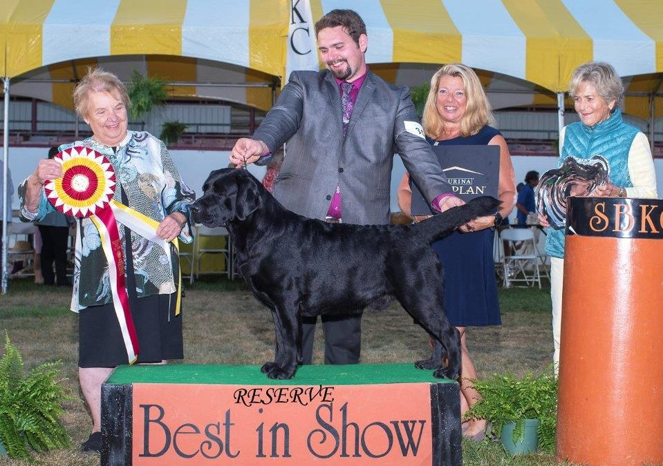 Bruce Wins Reserve Best in Show!